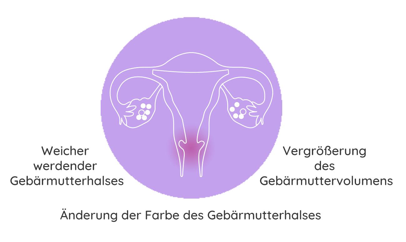 Schwangerschaft-wahrend-der-Schwangerschaft